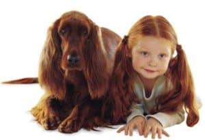 как не бояться собак