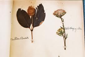 Гербарий: выбор растений, сушка, оформление, гербарий в школу, детские поделки