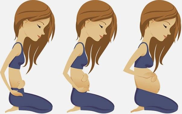 Рост живота во время беременности